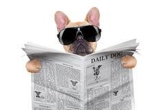 Lectura del perro Foto de archivo libre de regalías