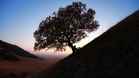 Lecture de silhouette contre l'arbre au coucher du soleil Photo stock