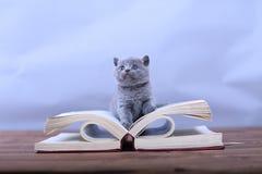 Lecture mignonne de chaton photos stock