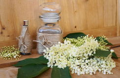 Lecznicza roślina - elderflower Zdjęcia Stock