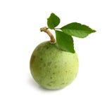 Lecznicze Bael owoc odizolowywać na białym tle Zdjęcia Stock