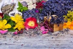 Lecznicze rośliny, naturalna medycyna zdjęcie stock