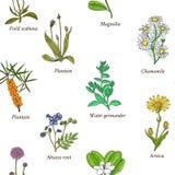 Leczniczy ziele i kwiaty Obrazy Royalty Free