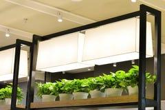 LED光用于种植植物和花 库存照片