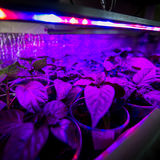 LED照明设备生长植物 库存图片