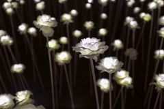 LED花园 库存图片