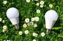 LED-Birnen mit Gänseblümchen im Gras Stockfoto