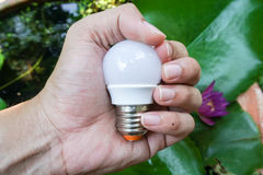LED bulb. In hand with lotus leaf background Royalty Free Stock Photos
