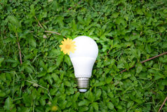 LED Bulb with lighting. Technology of eco-friendly lighting Stock Photos