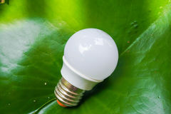 LED bulb. In nature background Stock Photos