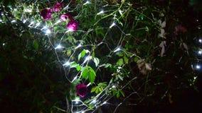 LED elettrico con Rose Flower video d archivio