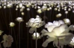LED flower garden Royalty Free Stock Photography