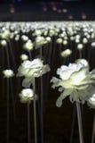 LED flower garden Royalty Free Stock Images