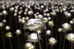 LED flower garden Royalty Free Stock Photo