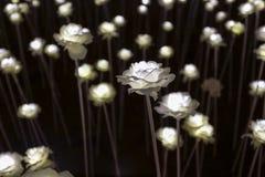 LED flower garden Stock Image