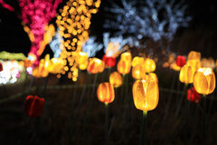 LED flowers garden at night Stock Images
