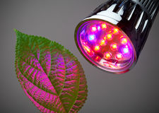 LED grow light. With green leaf Stock Photography