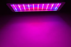 LED grow light Royalty Free Stock Photography