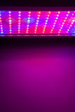 LED grow light Royalty Free Stock Photo