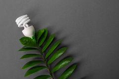 LED lamp with green leaf, ECO energy concept, close up. Light bulb on grey background. Saving  and Ecological Environment. Copy sp Stock Image