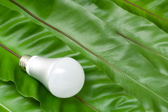 LED light bulb. On the green fern leaves Royalty Free Stock Photo