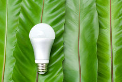 LED light bulb. On the green fern leaves Royalty Free Stock Image