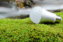 LED light bulb. On the green moss near the brook Stock Images
