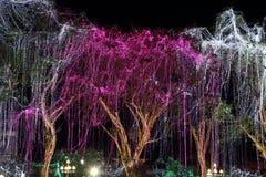 LED lighting decoration on a tree Stock Photos