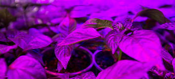 LED lighting Grow plants Royalty Free Stock Photography