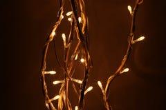 Led lights on tree. Led white lights on tree Royalty Free Stock Photography
