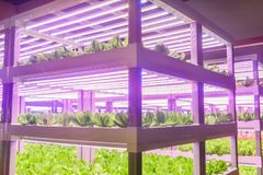 Led plant growth lamp used in Plant factory. Led plant growth lamp used in Facility agriculture,Vertical agriculture,Indoor planting,Plant factory.Mimicking royalty free stock images