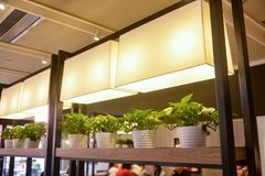 Led plant growth lamp used to grow seedling stock image