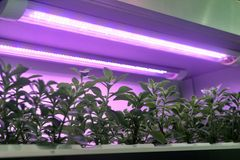 Led plant growth lamp used to grow seedling stock photography