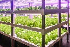 Led plant growth lamp used in Vertical agriculture stock photography