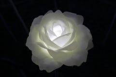 LED White Rose Stock Photo
