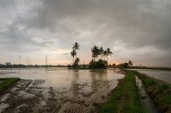 Ledande bana in mot kokospalmen i risfältfält Arkivfoton