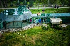 Ledare - Juli 29, 2014 på den Parc safari, Quebec, Kanada på ett b Royaltyfri Bild