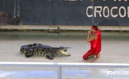 Ledare-show stor krokodil på golvet i zoo royaltyfri fotografi