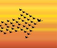 Ledarskap- och synergibegreppsillustration: Ett antal svanar som flyger mot en aftonhimmelbakgrund Royaltyfri Foto