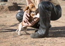 Leder-beklede mens en leuke hondmetgezel stock afbeeldingen