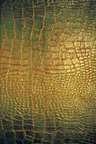 Lederne Beschaffenheit des Reptils Lizenzfreies Stockbild