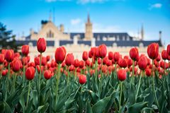 lednice城堡美丽的景色与暴风云和开花的 图库摄影