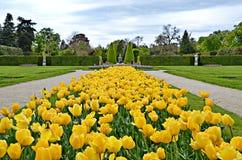 Lednice Tulips Royalty Free Stock Image
