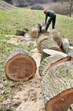Ledning av skogar, skogsbrukövningar Arkivfoton
