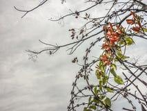 Ledningsnät Flora Outdoor Photo Arkivfoton