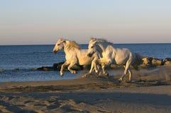 ledsar hästen Arkivfoto