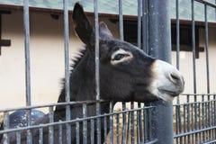 Ledsen åsna i buren Royaltyfria Bilder