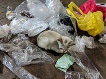 Ledsen övergiven katt i - mellan plast- avfalls i Malaysia arkivbilder