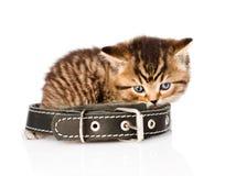 Ledsen brittisk strimmig kattkattunge med kragen Isolerat på den vita backgrouen Royaltyfri Foto