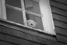 Ledsen ensam nalle på fönstret Arkivbild